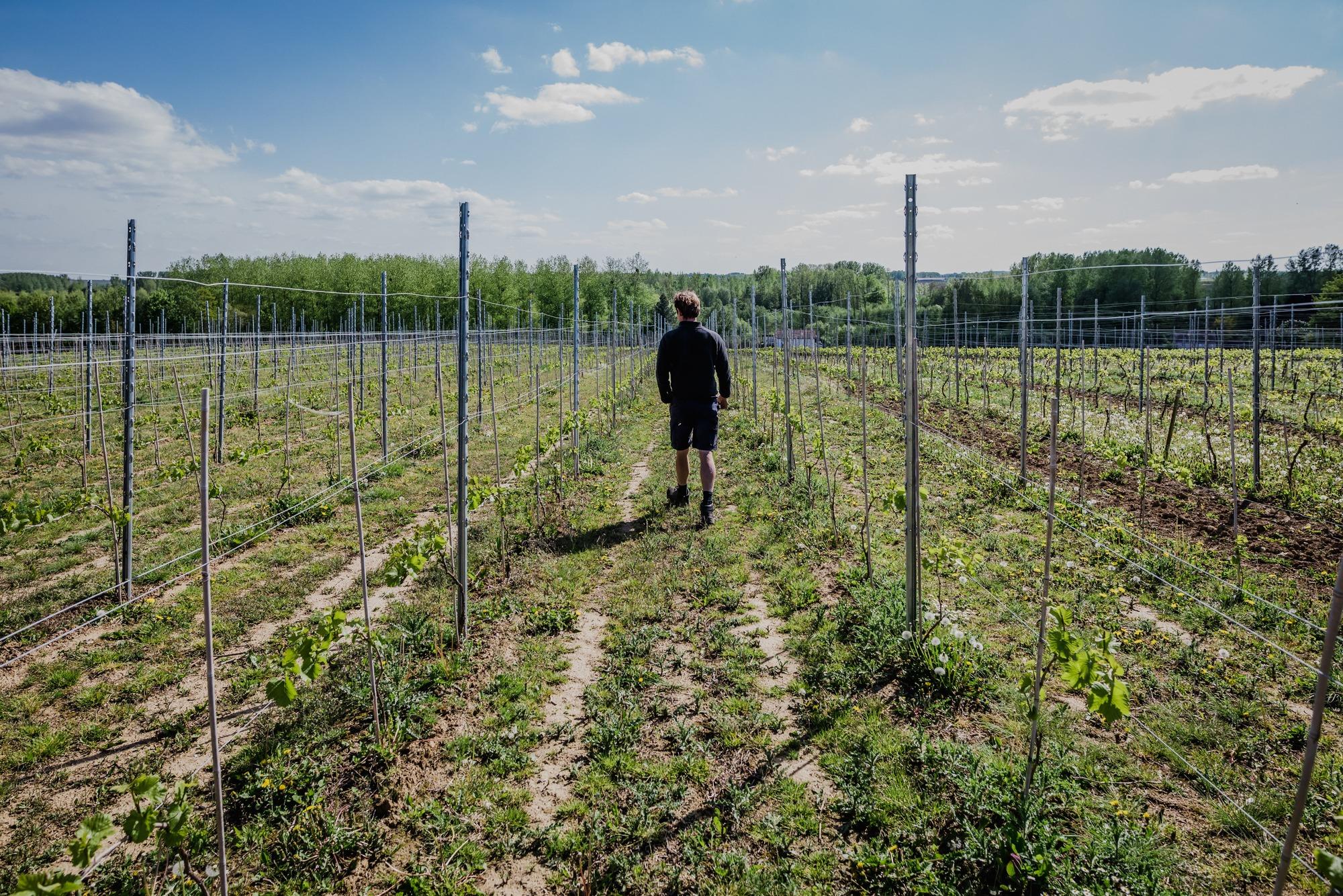 Het verhaal van wijnproducent Claire Martin in Hasselt