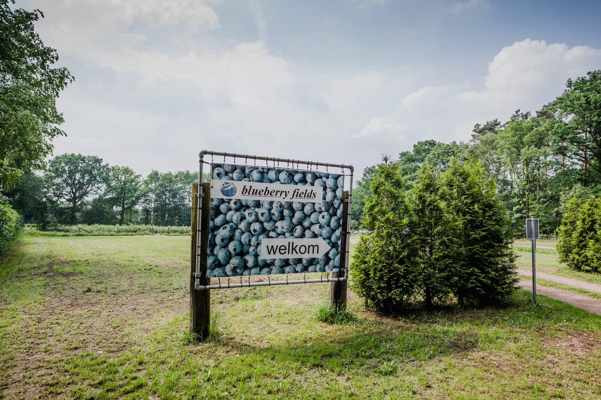 Het verhaal van Blueberry Fields in Koersel