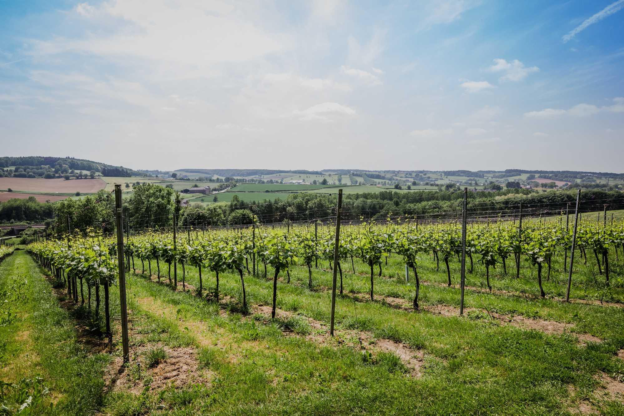 Het verhaal van wijndomein Crutzberg in Sint-Martens-Voeren