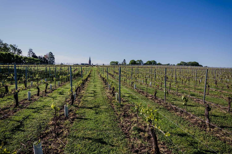 Het verhaal van wijnkasteel Genoels-Elderen in Riemst