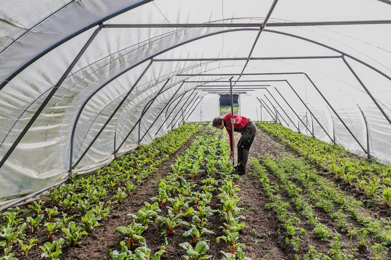 Het verhaal van bioboer Het Vrije Veld in Zutendaal