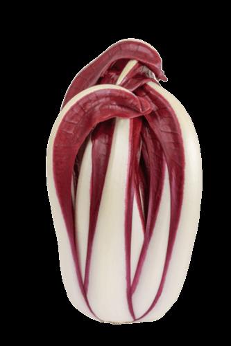 Roodlof (Radicchio rosso)
